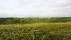 Земельный участок, поле Левое Черепаново