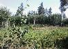 Земельный участок, Жарки-2