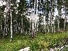 Земельный участок, Зеленый Берег