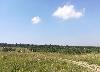 коттеджный поселок Раздолье