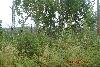 Земельный участок, Еловый (на 17 км)