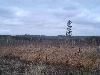 коттеджный поселок Еловый (на 19 км)