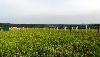 Земельный участок, поле Забиралово