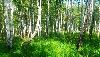 садоводство Зеленый Берег