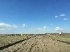 Земельный участок, Хомутово