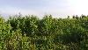 Земельный участок, поле Суханово