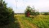 Земельный участок, поле Борок