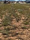 Земельный участок, Сахюрта
